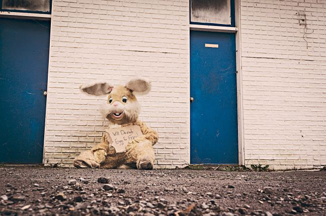 homeless bunny pic
